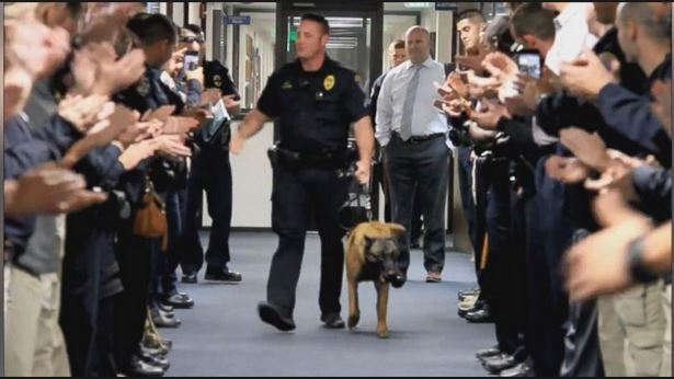 Photo of Watch how this 9-year-old police dog retire in grand fashion