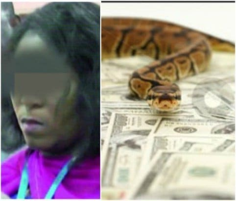Photo of Money-swallowing snake:  JAMB suspends Staff as investigation begins