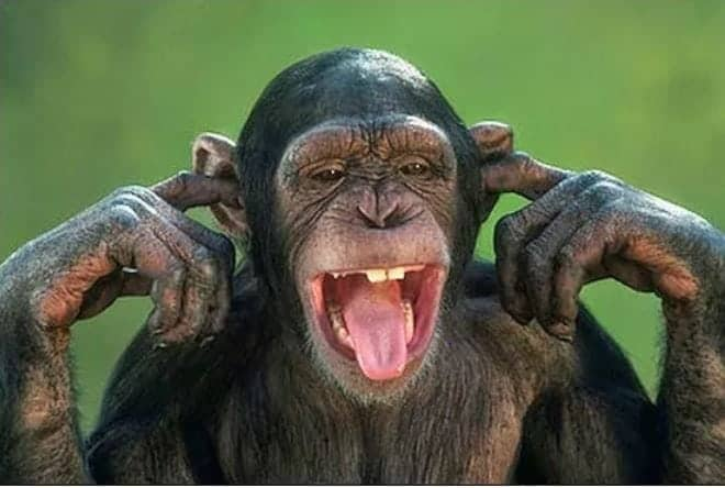 Photo of Monkeys allegedly swallow N70million of Northern Senators Forum money
