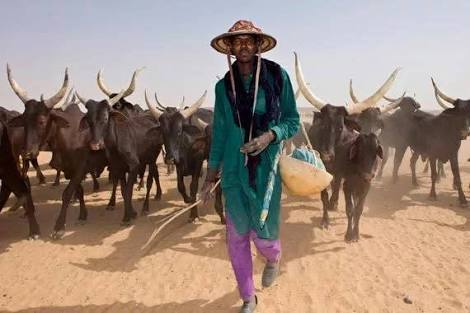 Photo of Fulani herdsmen allegedly invade Benue community, order villagers to vacate homes