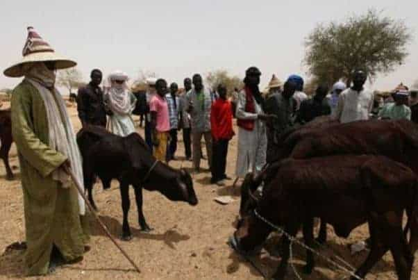 Miyetti Allah blames state governors farmer/herdsmen crisis