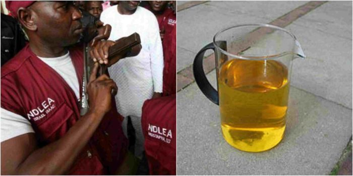 Photo of Adamawa Youths  Drink Human Urine To Get High – NDLEA