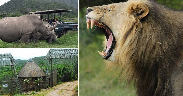 Three poachers eaten by lions after breaking into game reserve in South Africa