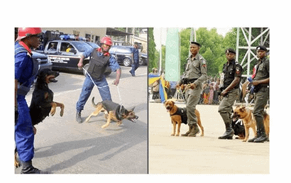 Photo of 2019 Elections: Police, civil defence demand N317m to feed dogs, horses