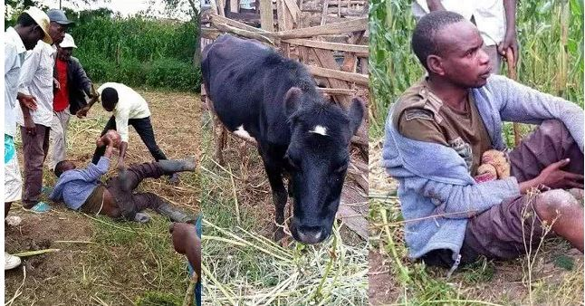 Photo of Man caught sleeping with a cow says he was lonely and needed to quench his urge