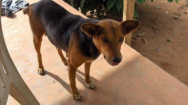 Photo of Dog killed while attacking a 1-yr-old boy in Abuja