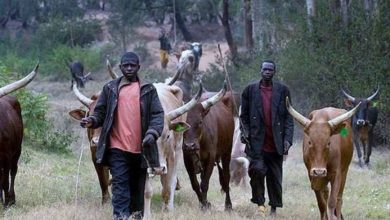 Photo of Northern youths give FG 30-day ultimatum to implement Ruga settlement
