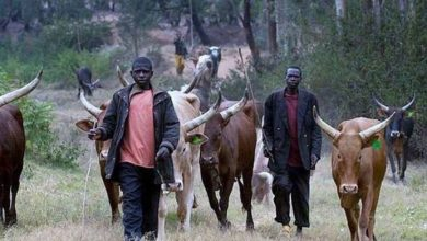 Photo of Commotion as Fulani herdsmen kill each other over Cows in Imo state