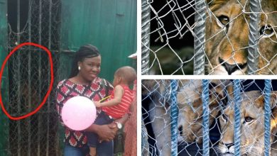 Photo of Man cries out after Lion almost bit his daughter's hand at Abuja Park and Zoo