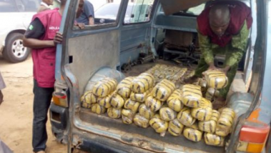 Photo of Four persons arrested over possession of 895kg cannabis in Kano