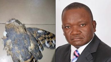 Photo of How an Owl attacked Governor Ortom in Church after Supreme Court Judgement (photos)