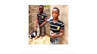 Photo of How pregnant goat was raped to death in Ekiti State (Photo)