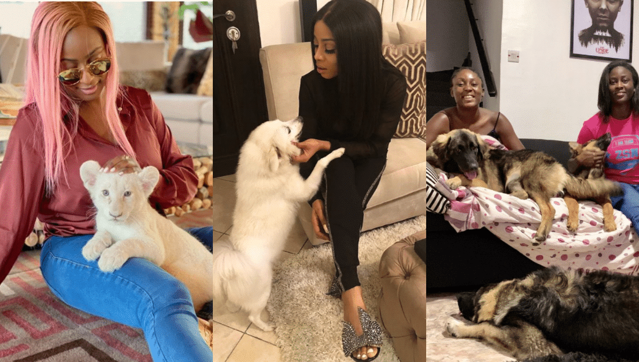Photo of Toke Makinwa, DJ Cuppy and other celebrities with cute pets | Photos